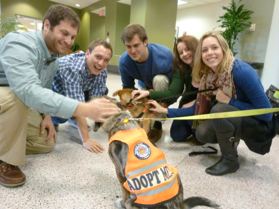 George Mason Law School students visit with a lucky HT rescued pooch