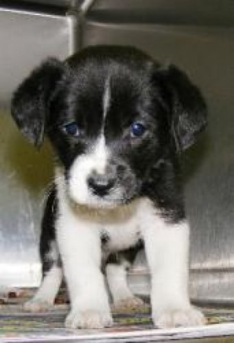 I was saved from Parvo. Thanks!!