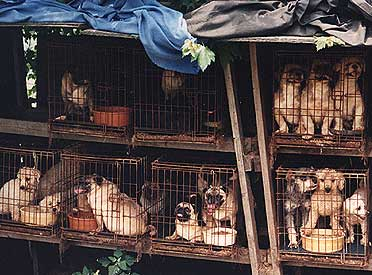 Puppy mills confine dogs in small, unsanitary and unsafe cages where they are overbred for years. Their misery creates puppies that are sold in pet stores. Many suffer from genetic health issues and well as severe behavioral issues.