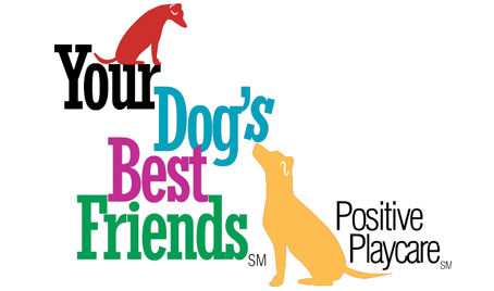 Your Dog's Best Friends