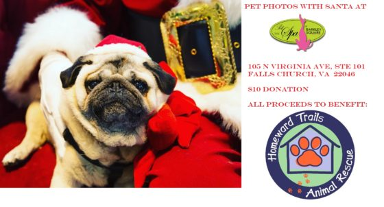 Photos With Santa Paws at Barkley Square December 2