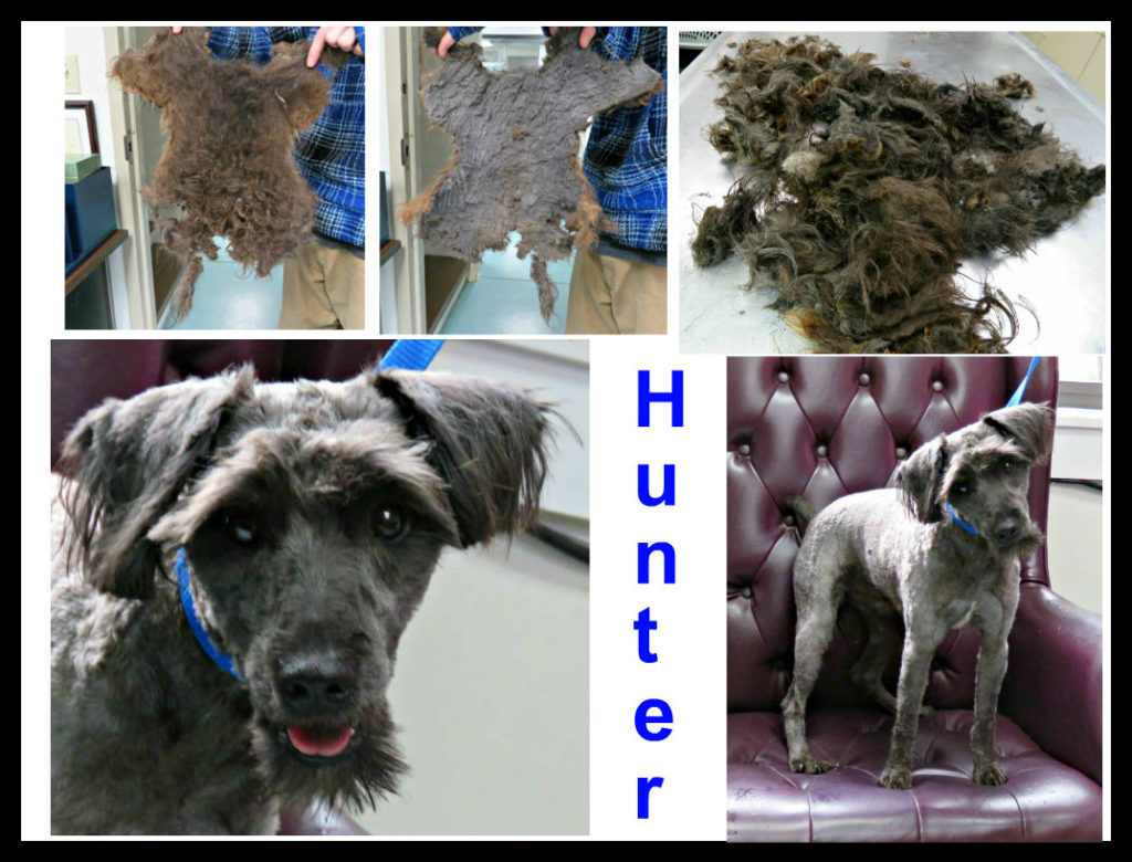 Most Matted Dog We've Ever Seen (By 7/24) « Homeward Trails Animal